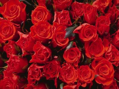 boki de fleur pour toi ilham - http://www.skyrock.com/m/account/?c
